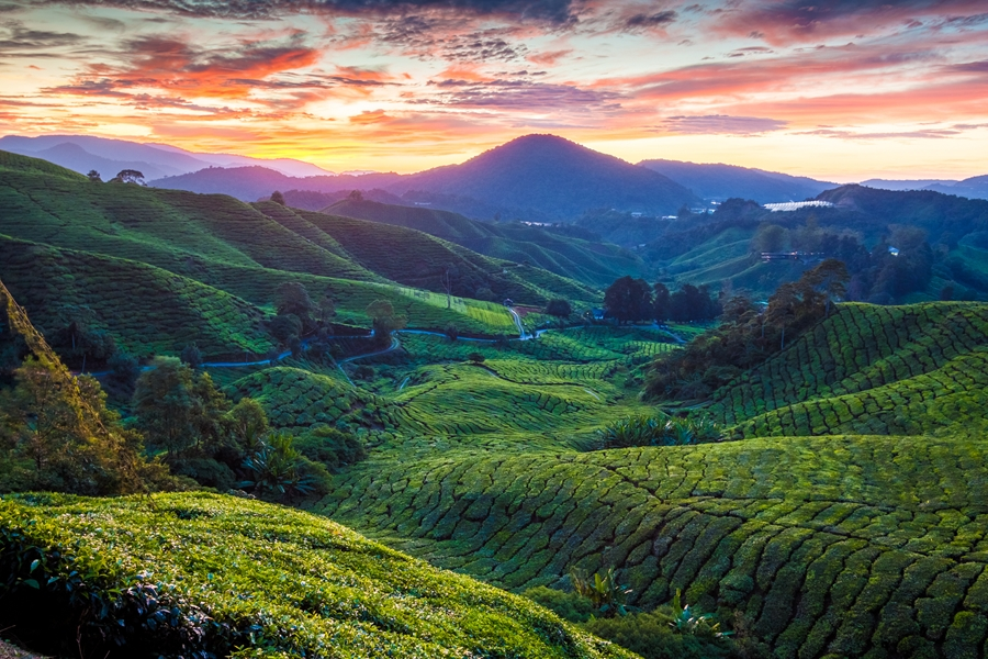 Maleisie Cameron Highlands Theeplantages zonsondergang