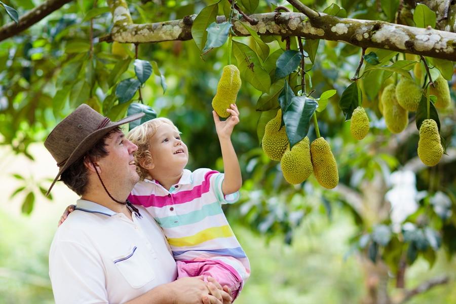 Maleisie Vader en zon jackfruit