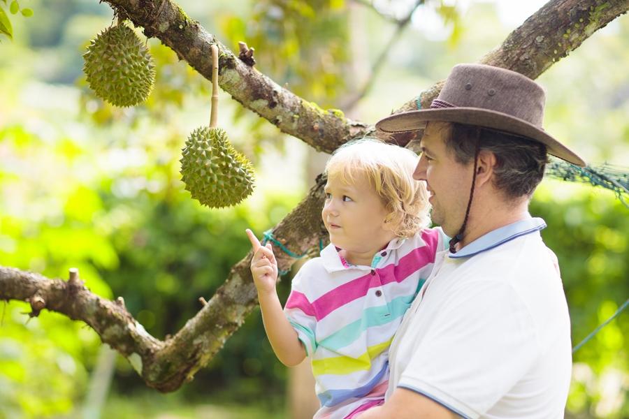 Maleisie Vader en zoon durian