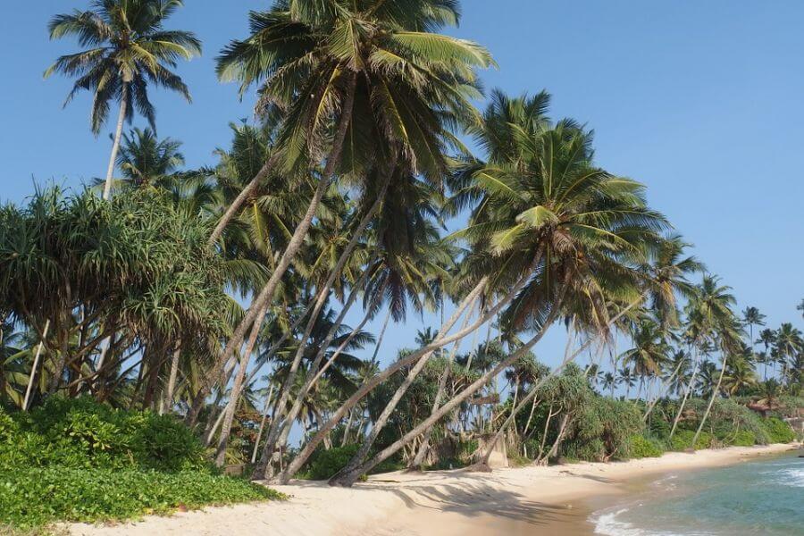 Sri Lanka Dickwella Strand zee palmbomen 058
