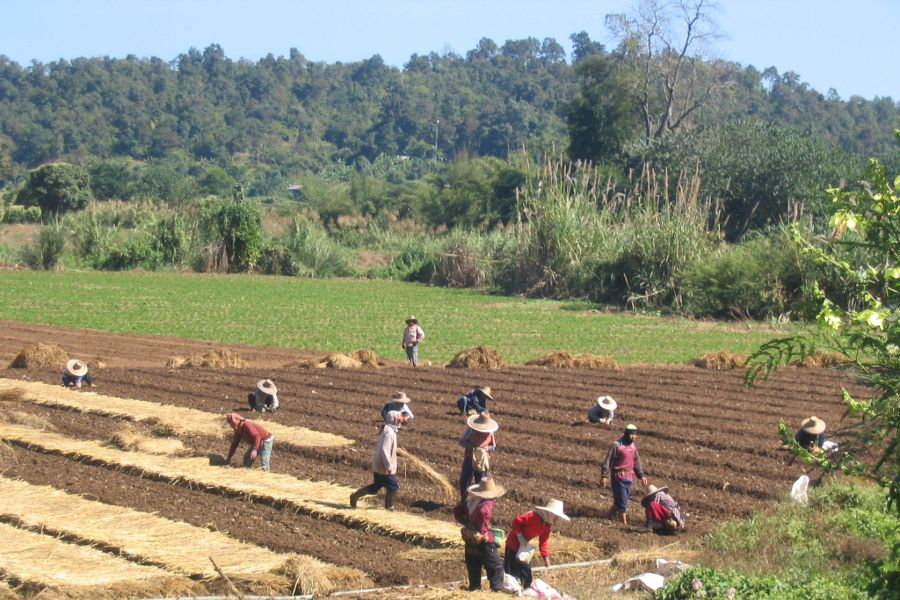 Thailand Chiang Mai Fang Valley vallei rijstvelden local farmers