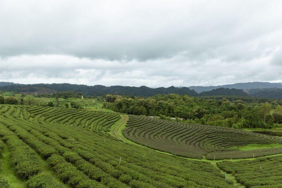 Thailand Chiang Rai rijstvelden landschap