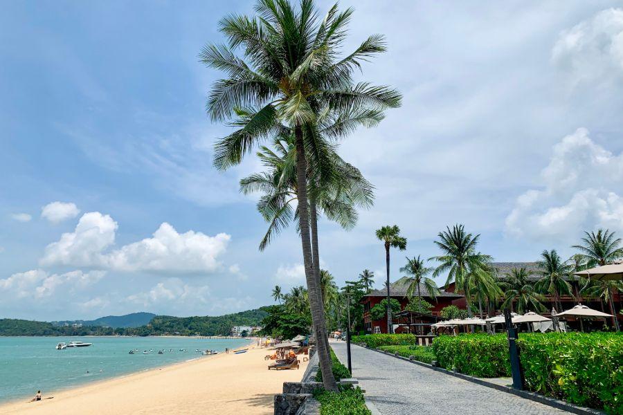 Thailand Koh Samui Bophut Beach kokosnoot boom tropisch strand