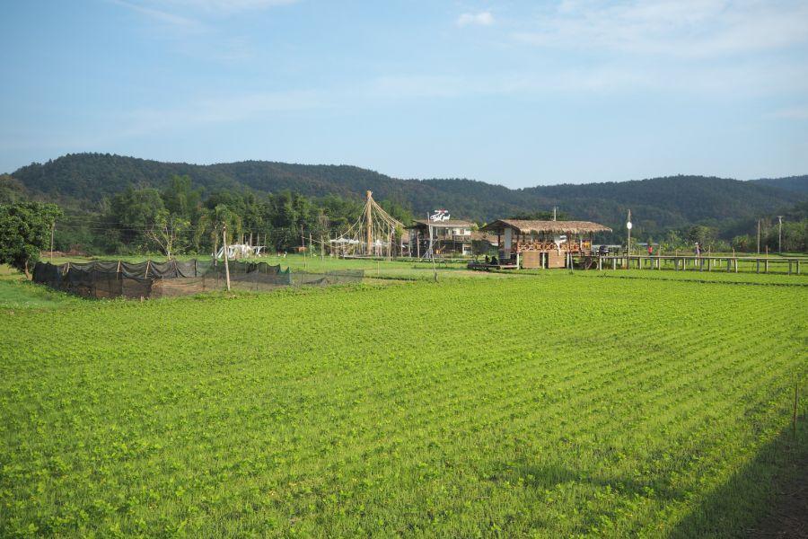 Dag 3: Lamphun – San Kampaeng- Chiang Mai – 43 km