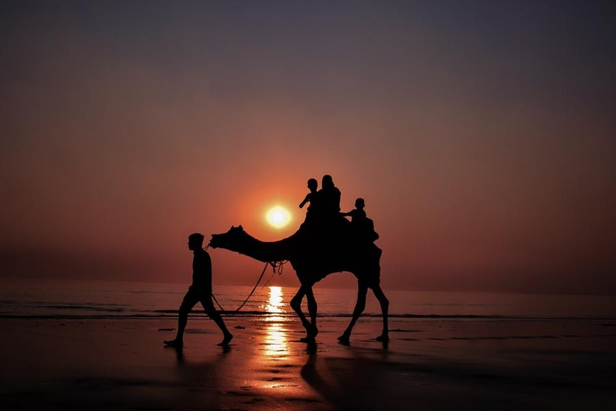 India Surat kameel zonsondergang