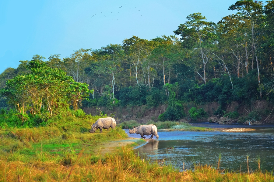 Nepal Chitwan National Park Neushoorn bij rivier