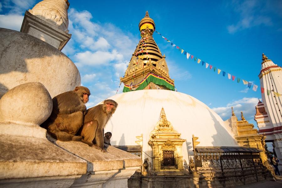 Nepal Kathmandu Swayambhunath tempel apen