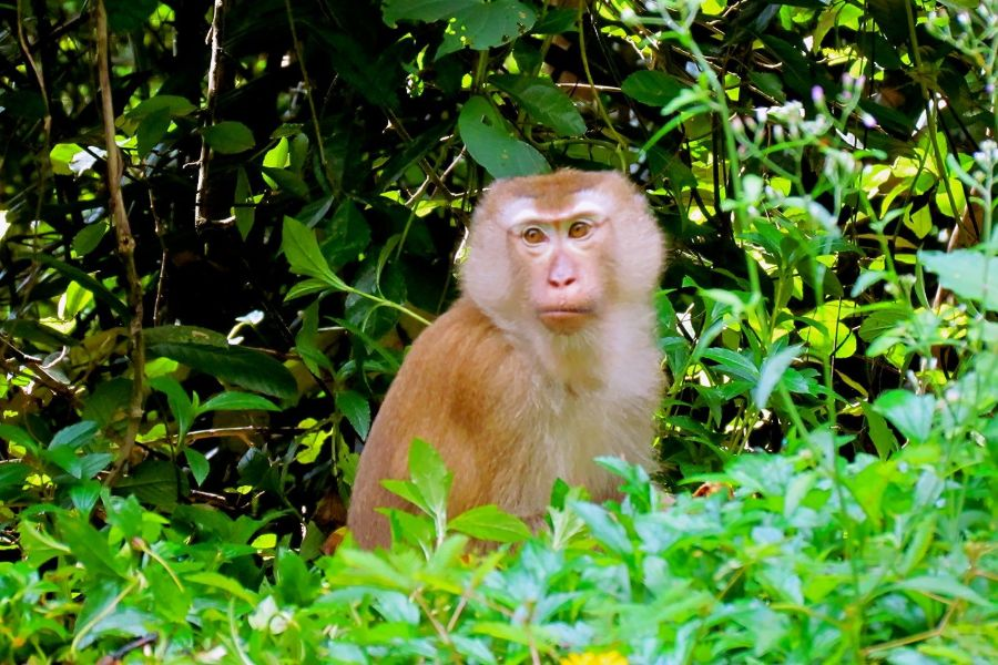 Monkey Hill, Phuket