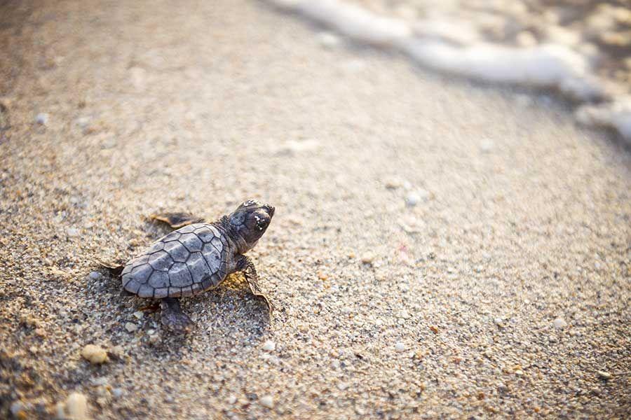 Thai Muang Turtle Sanctuary, Phuket