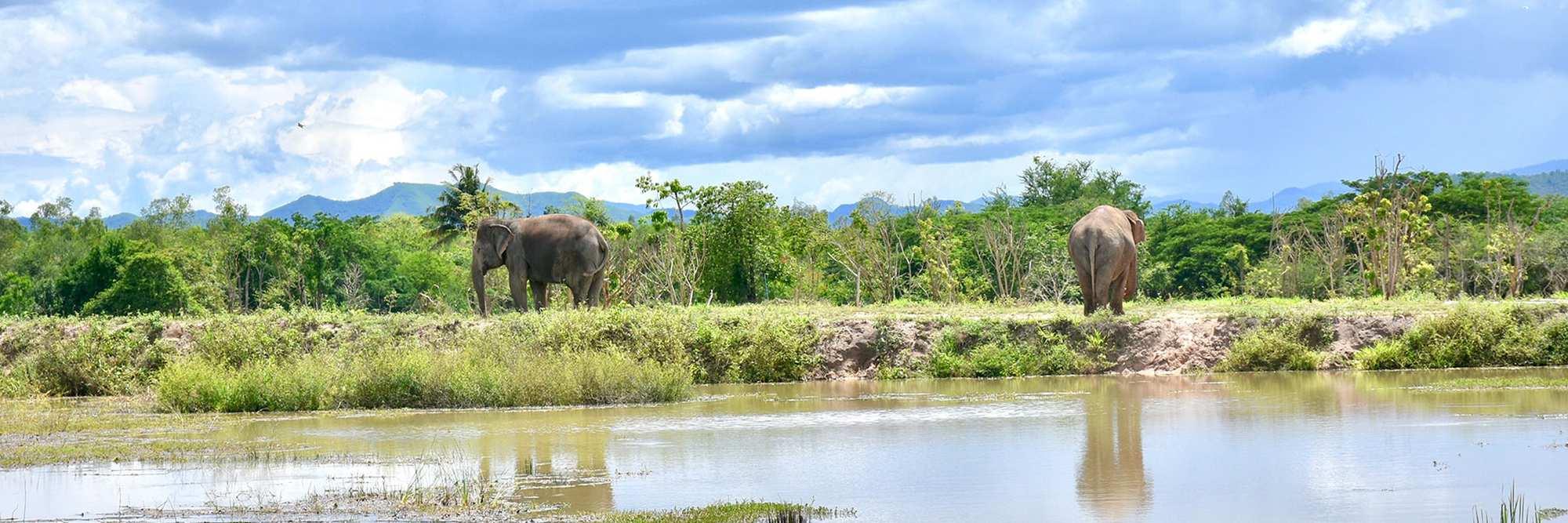 Gerelateerd blog artikel Loop mee met het Wildlife Friends Foundation tijdens jouw verblijf in een eco lodge