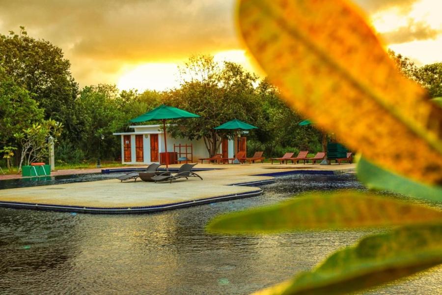 Oak Rey Elephant Lake 13